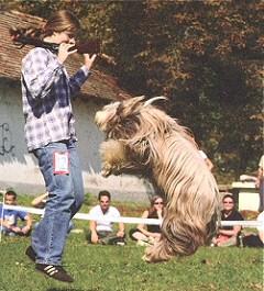 ugro-kutya