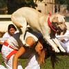 Mi az a dog dancing?