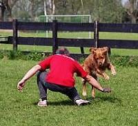 kutya, klikker, edzés