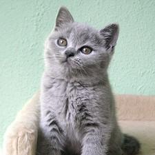szurke-macskusz