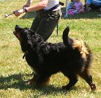 kutya-tanciskola