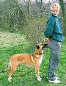 tappancs-a-kutya