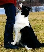 Táncos lábú kutyák: tanítsd meg őket tolatni is! Hírek a kutya-tánciskolából