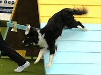 AGILITY DOGFIT KUPA 2006
