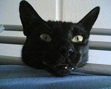 fekete macskás babona, szerencse, gyógyító
