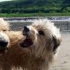 KutyaTv: Miért ugatnak a kutyák?