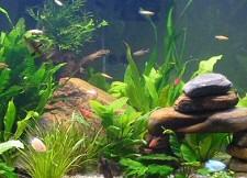 akvarium-vize