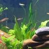 Miért kell az akváriumi vizet cserélni?