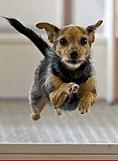 kutya-sport