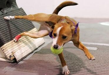 flyball-kutyaknak