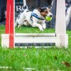Mi a flyball?