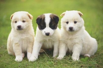 Útmutató újdonsült kutyagazdiknak