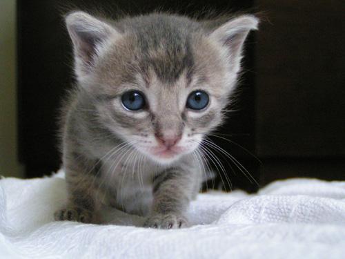 Kicsi a macska, de eszik!