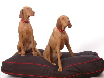 kutyaágy, kutyafotel, kutya fekhely