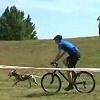 4 láb és 2 kerék: kutyával és biciklivel