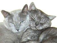 ket-orosz-kek-cica