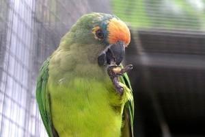 Te beszélni tanítod, a papagáj pedig repülni tanít - képekkel