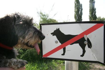 kutya, sétáltatás, tilos