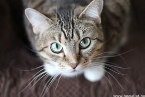 Hogyan adjunk be gyógyszert a macskának? Tuti módszer videóval!