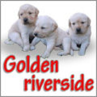 golden-riverside