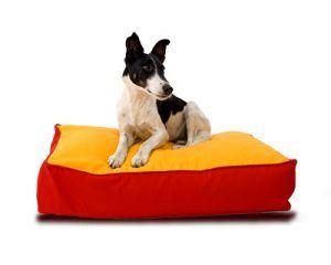 kutya, kutyaágy, játék