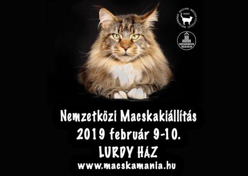2019_macska_lurdy