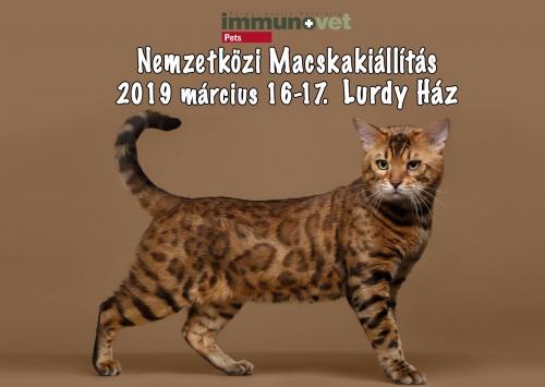 lurdy_macska