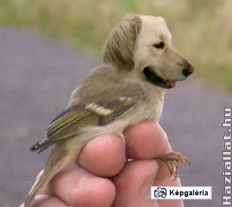 Photoshop állatok, fotosop állatok