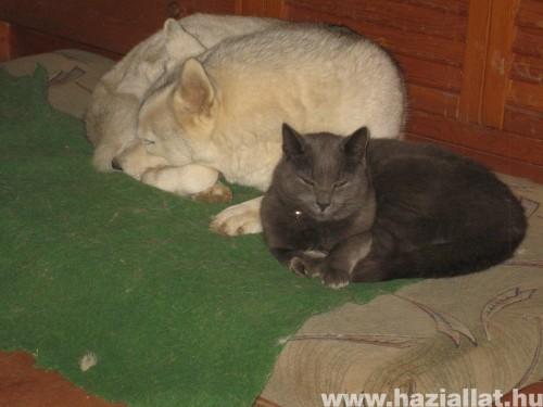Bella és Vacask