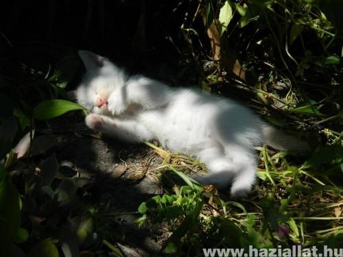 Így szeretek aludni