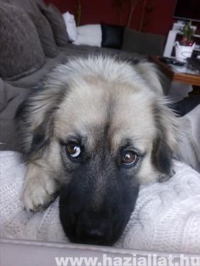 Aranyos kutya szemek