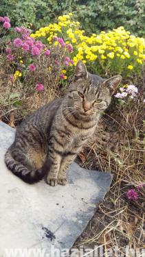 Tigris virágokkal