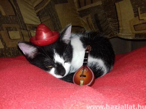 A megfáradt zenész