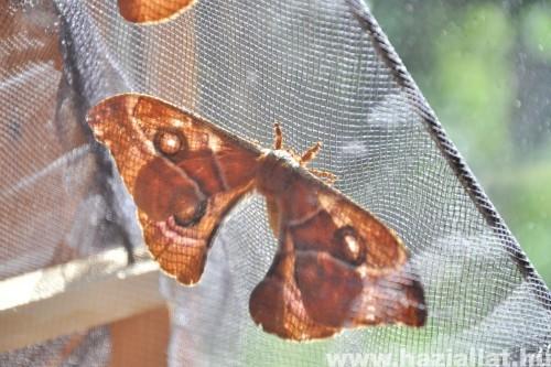 Pillangó napfényben