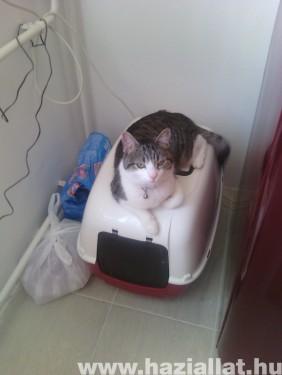 Cipzár macska