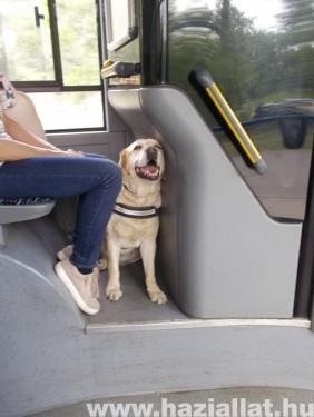 munka közben a buszon