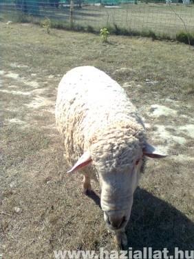 Emil aki húsvéti bárányból cseperedett...
