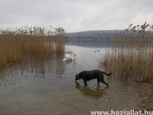 a tónál