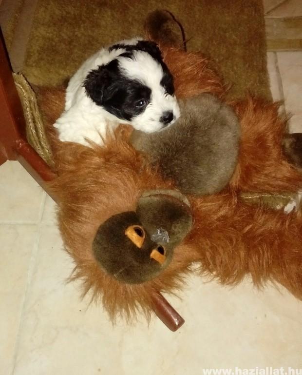 Ha nincs mama a majom is jó