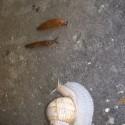 célfotó a csigafutamon