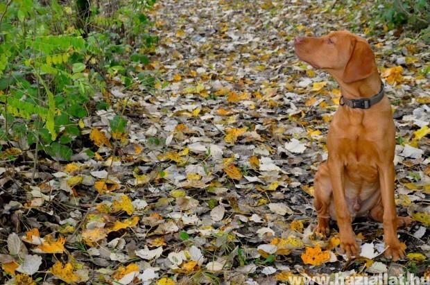 Ezredes ősszel