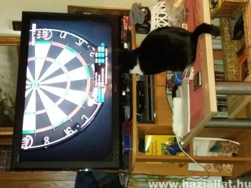 Szeretem a dartsot