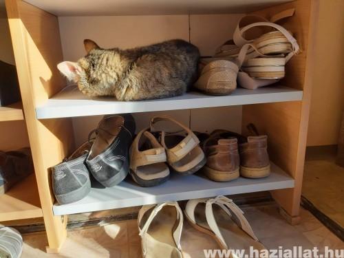 Elfoglaltam a cipő helyét