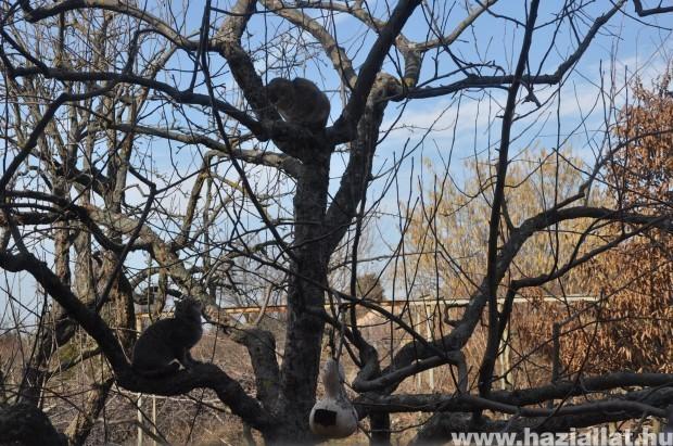 Macskabarát kert