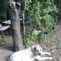 Sziszi, a legjobb kutyus