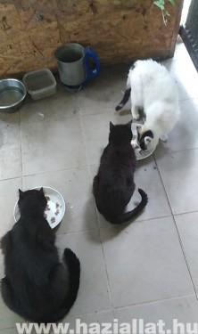 Cicák reggelije
