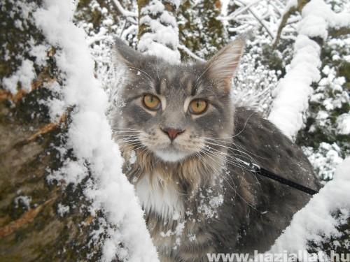 Elissa, a hóhercegnő