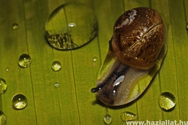 Az esőcsepp foglya