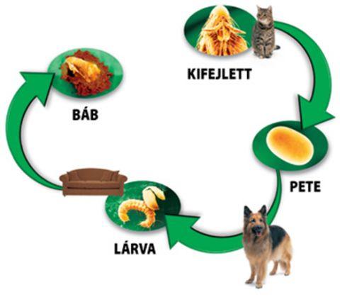 Hogyan védjünk meg kutyánkat a külső élősködőktől?